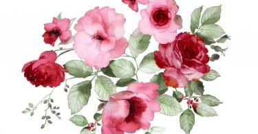 Pintura aquarelada de flores rosas e vermelhas.