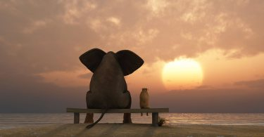 elefante e cachorro sentados em uma praia de verão.