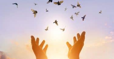 Mulher rezando e pássaro livre, apreciando a natureza no fundo por do sol.