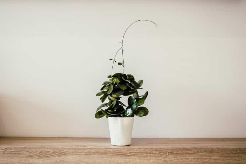 Vaso de planta no chão