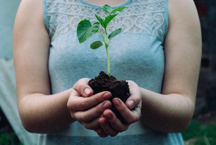 Mãos femininas segurando uma muda de planta.