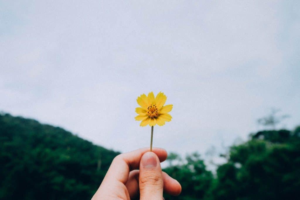 Mão segurando uma pequena flor amarela.