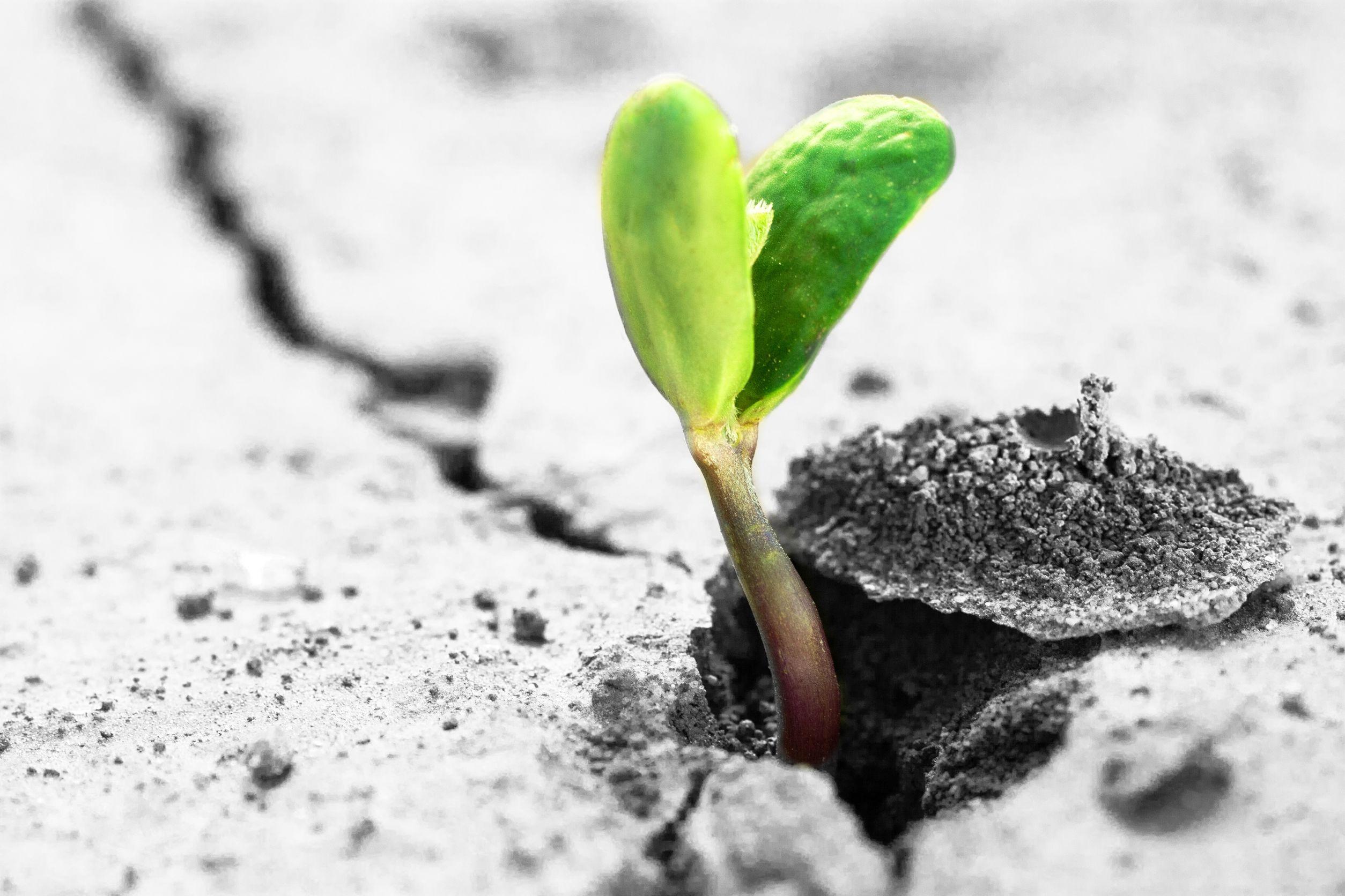 Broto de planta verde nascendo de terra seca e cinza