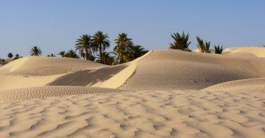 Dunas de areia, palmeiras ao fundo, céu azul.