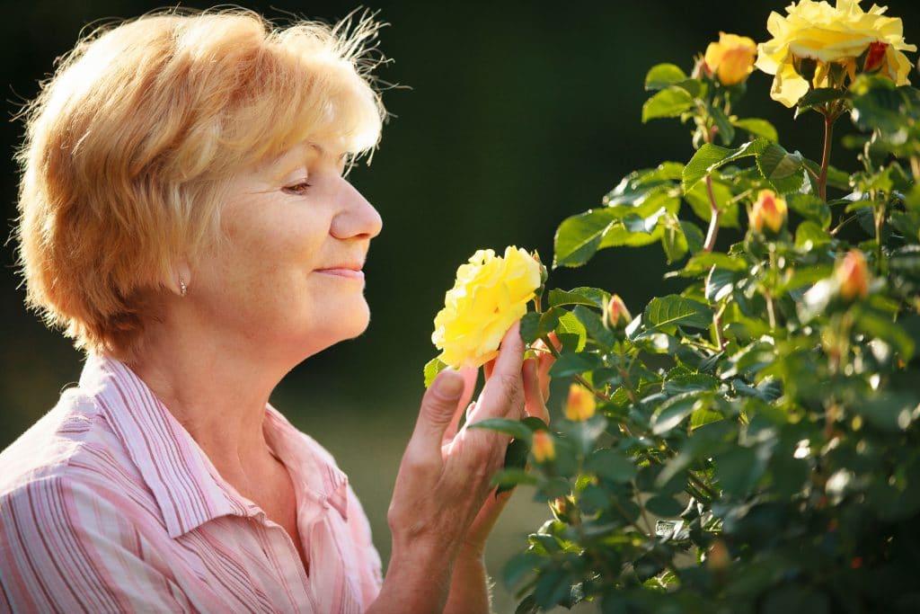 Mulher d emeia idade cheira uma grande rosa marela.