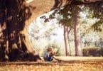 Menino lendo um livro embaixo de uma grande árvore.
