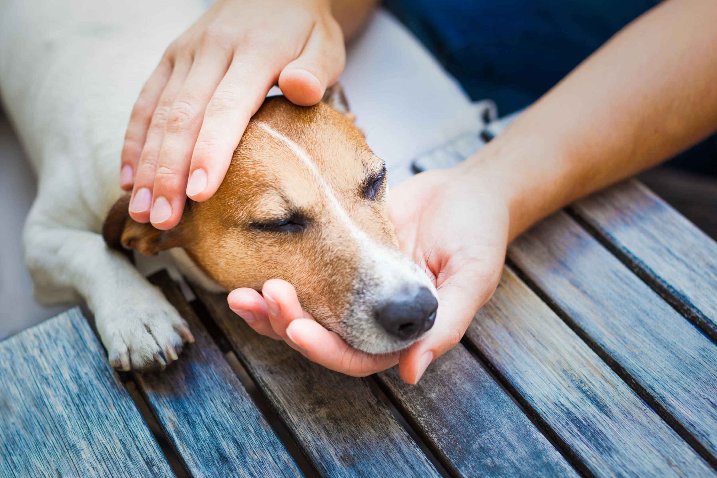 Cachorro dormindo apoiado em uma das mãos de seu dono enquanto a outra mão faz carinho em sua cabeça.