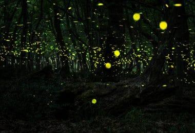 Vagalumes em uma floresta à noite