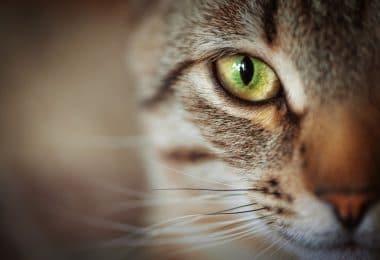 Close em metade do rosto de um gato. Ele é listrado marrom e tem o olho verde.