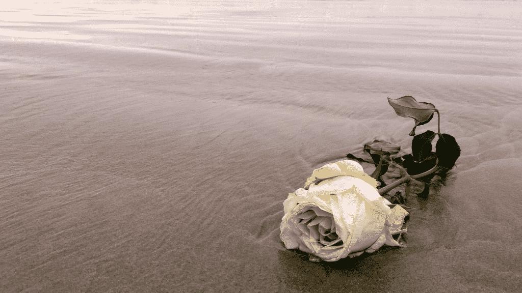 Flor de oferenda para Iemanjá