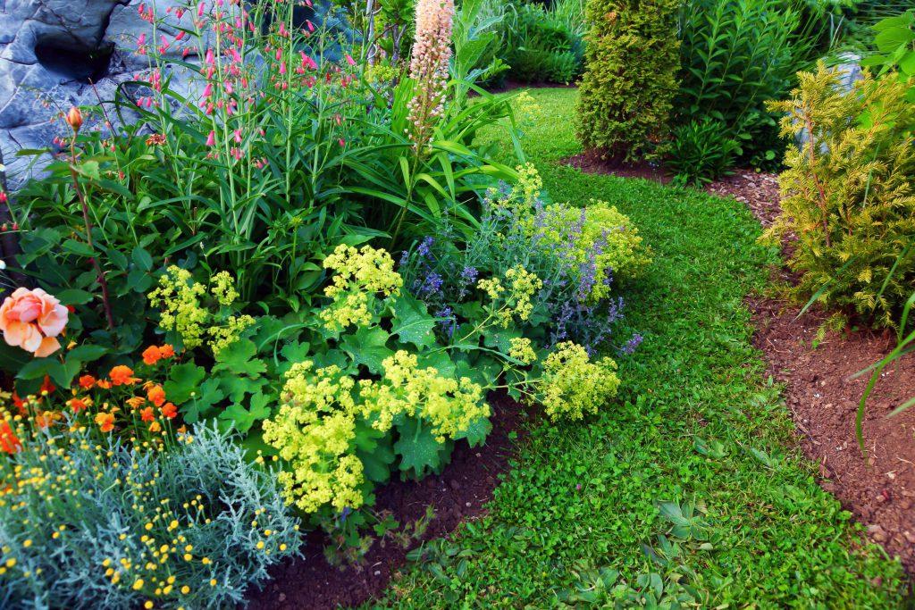 foto de jardim com flores coloridas.