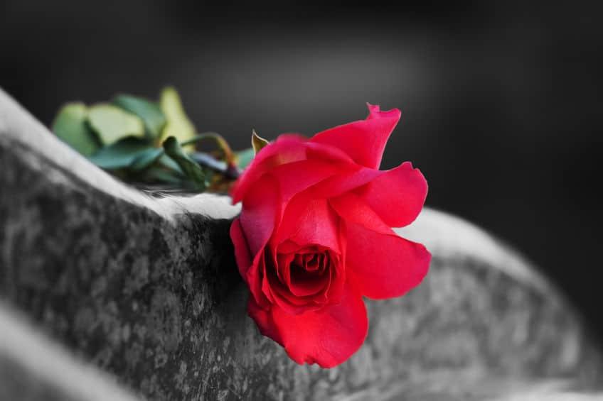 Rosa vermelha sobre pedra