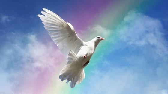 Pomba branca no céu com um arco íris