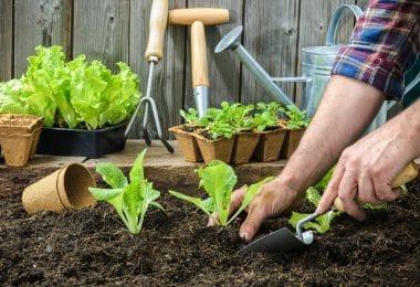 Pessoa plantando mudas de alface em terra, com vasos de plantas e utensílios de jardinagem ao fundo.