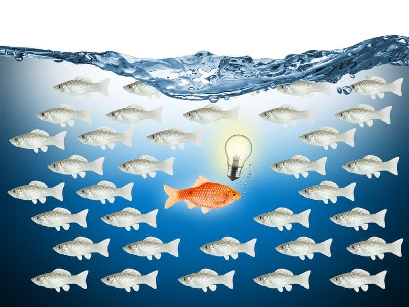 Peixe dourado em evidência no meio de peixes cinza e nadando para o lado contrário, indicando um estilo de vida diferente dos outros