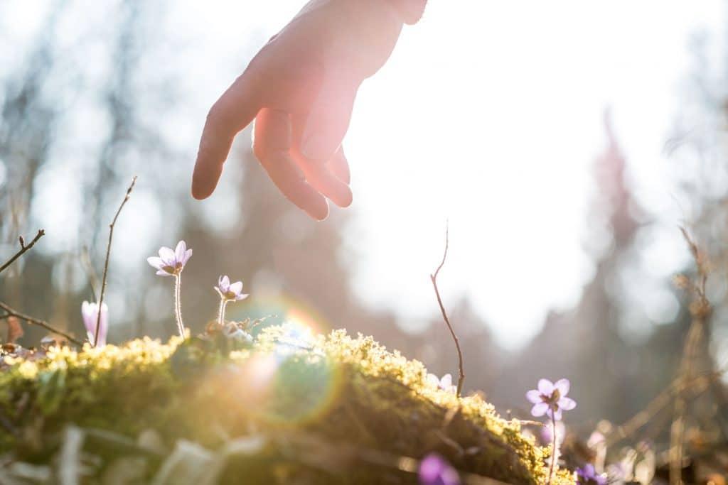 Mão prestes a tocar flores no gramado. Luz natural na foto.