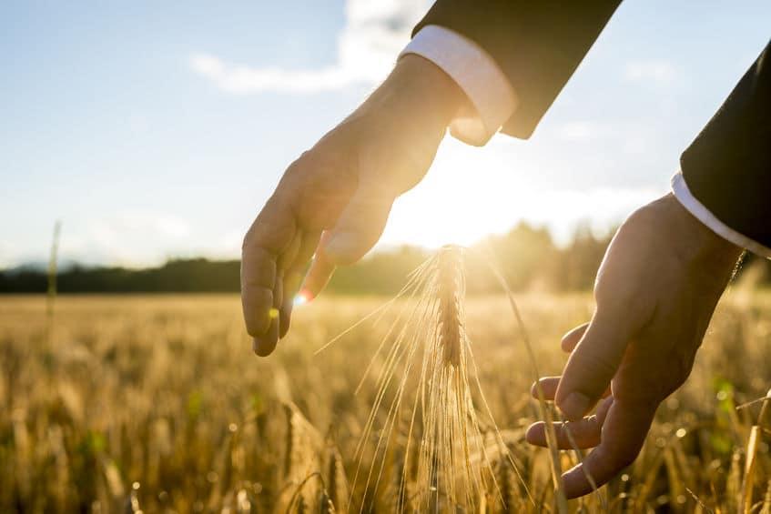 Homem de negócios com as mãos em torno de um trigo
