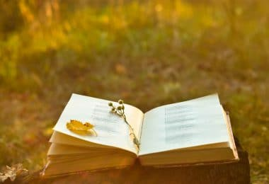 Livro aberto, com uma caneta e pétala de rosa amarela no meio, colocado em cima de tronco de cortado, no meio de um parque.