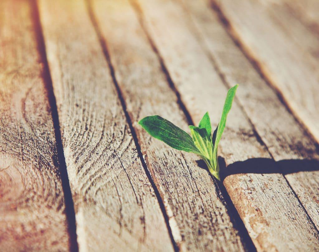 Plantinha verde que cresceu no meio de tábuas de madeira.