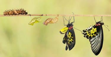 Lagarta, dois casulos e duas borboletas, todos em um galho de árvore, representando o ciclo de vida de uma borboleta.