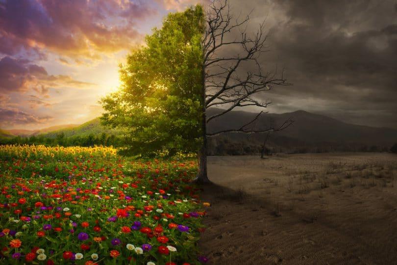 Árvore com uma de suas metades mortas, sob um cenário cinzento, e outra colorida, florida e viva.