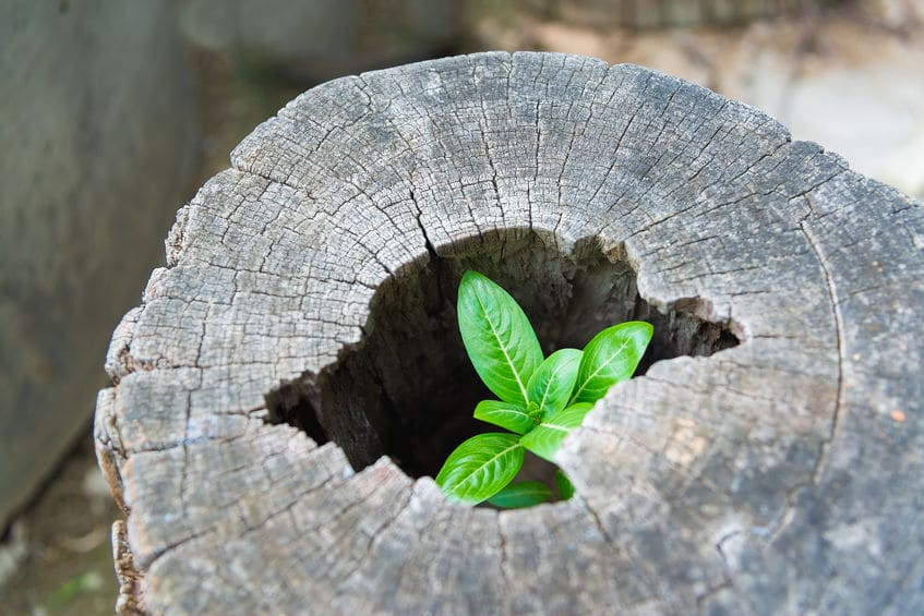 Muda de planta nascendo dentro de um tronco