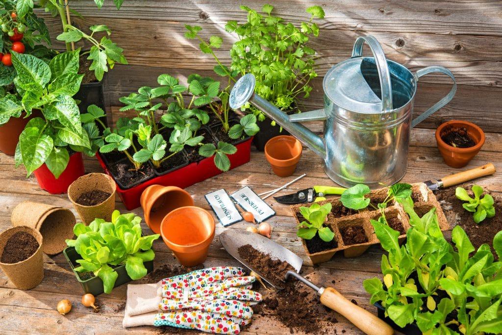 Utensílios de jardinagem : regador, pá, vasos, luvas e sementes, colocados todos em cima de mesa de madeira rústica, junto de vasos com plantas grandes