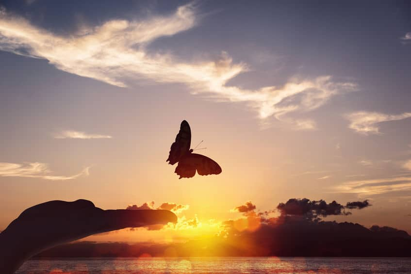 Borboleta voando livremente sob um fundo de pôr do sol