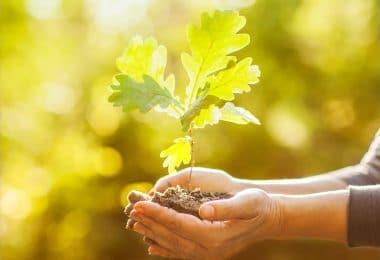 Mãos com broto de planta e terra iluminadas pelo sol
