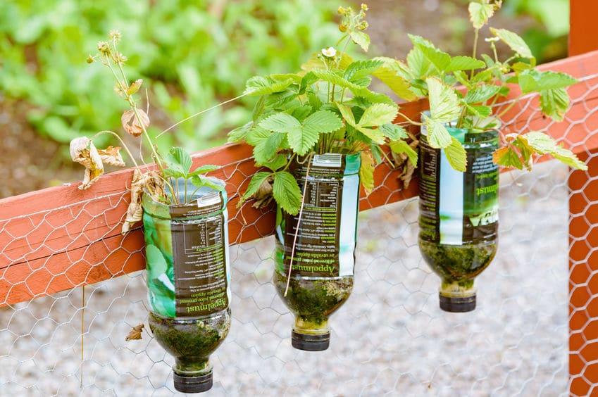Plantas em garrafa PET