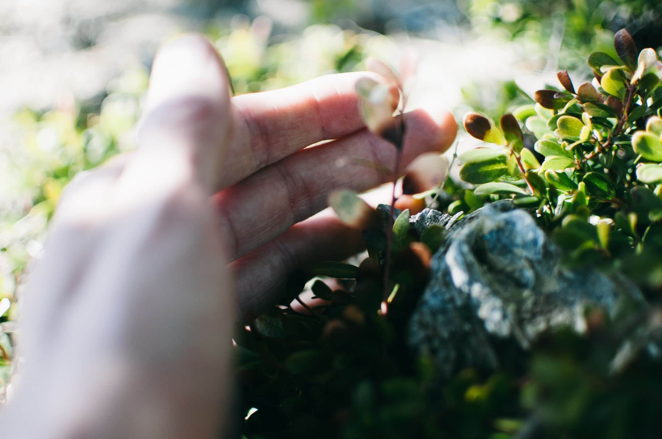 Mão com dedos tocando folhas pequenas de planta