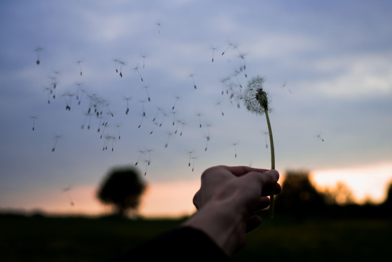 Mão segurando flor dente-de-leão se desfazendo no vento com paisagem de entardecer ao fundo