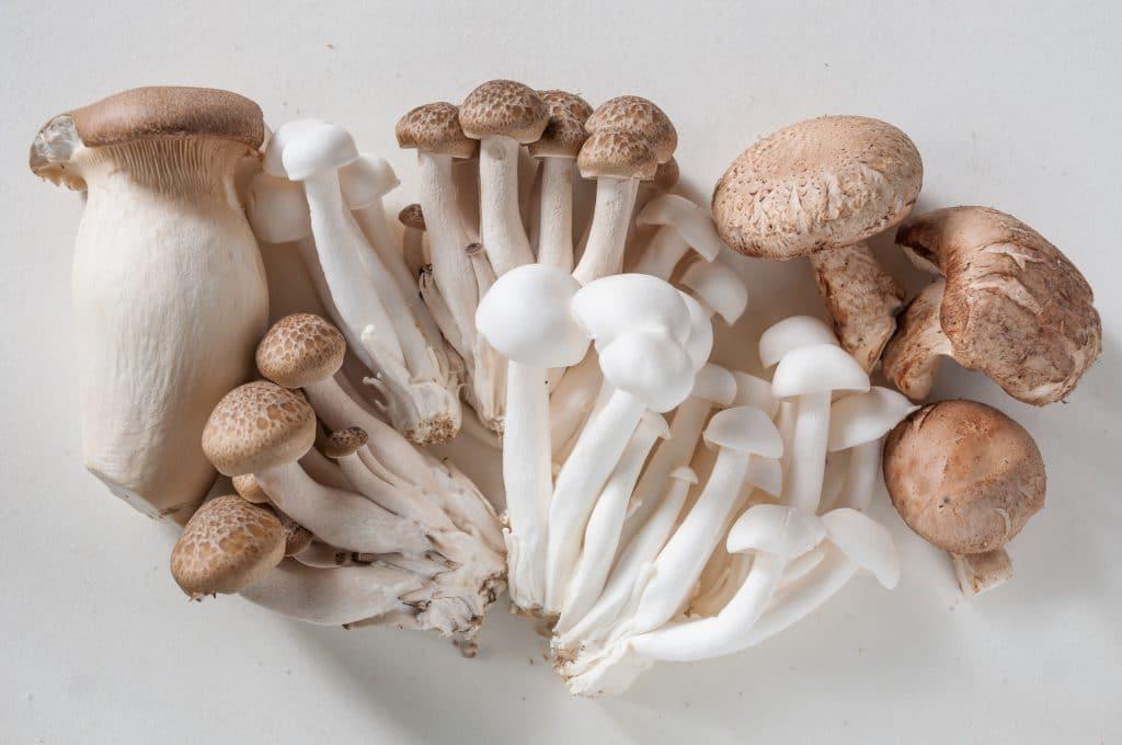cogumelos de shimeji em uma mesa branca