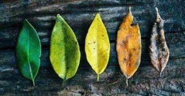 Folhas em ordem de saúde