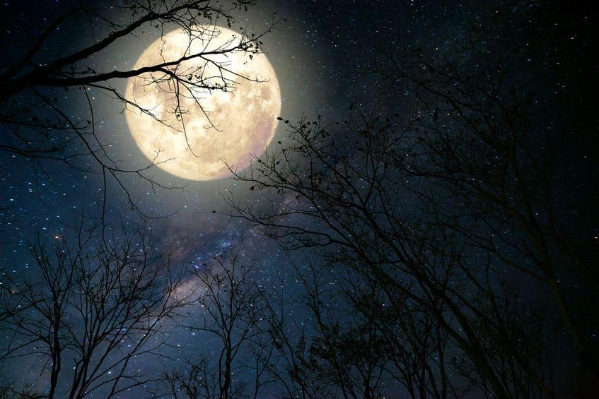 Lua cheia e árvore
