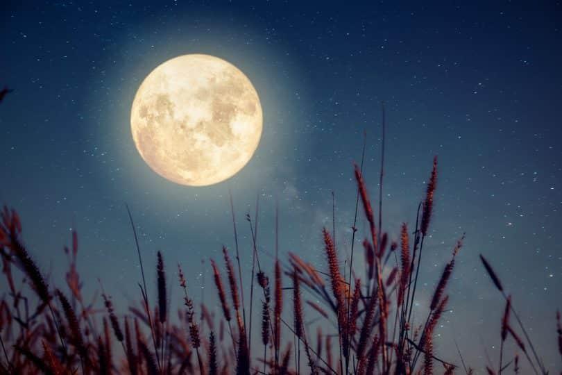 Lua e plantas.
