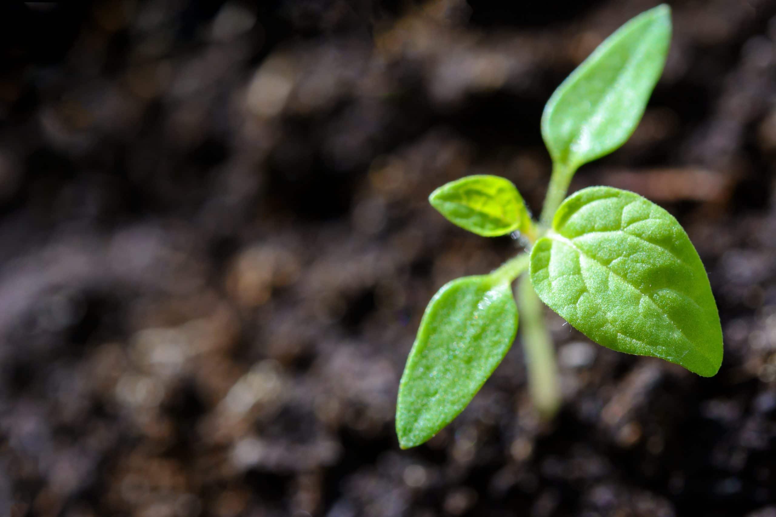 Pequeno ramo de folhas nascendo na natureza.