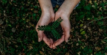 Mãos juntas segurando terra com broto de planta visto de cima