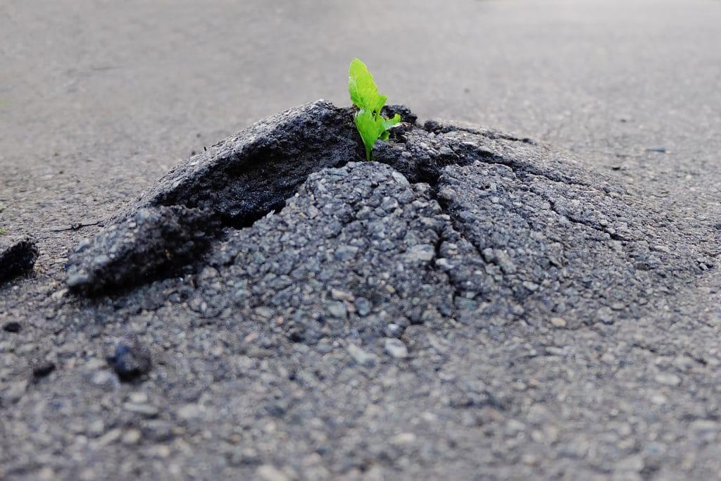 Uma pequena planta nascendo no chão asfaltado.