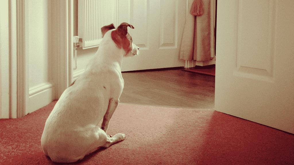Cachorro esperando dono na porta