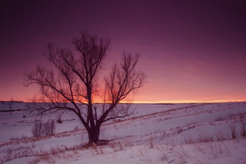 Árvore em um deserto de gelo com o sol se pondo ao fundo.