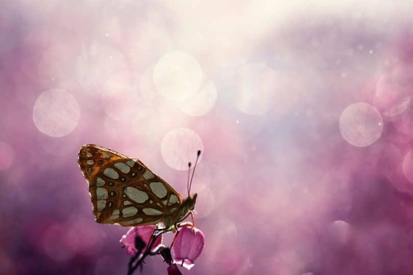 Borboleta em flor com fundo rosa