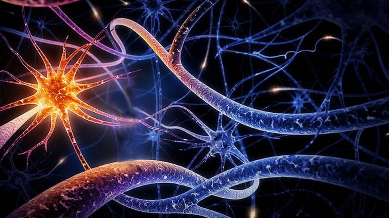 Ilustração das sinapses do sistema nervoso.