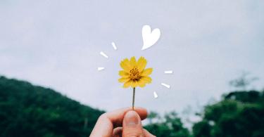 Segurando pequena flor amarela