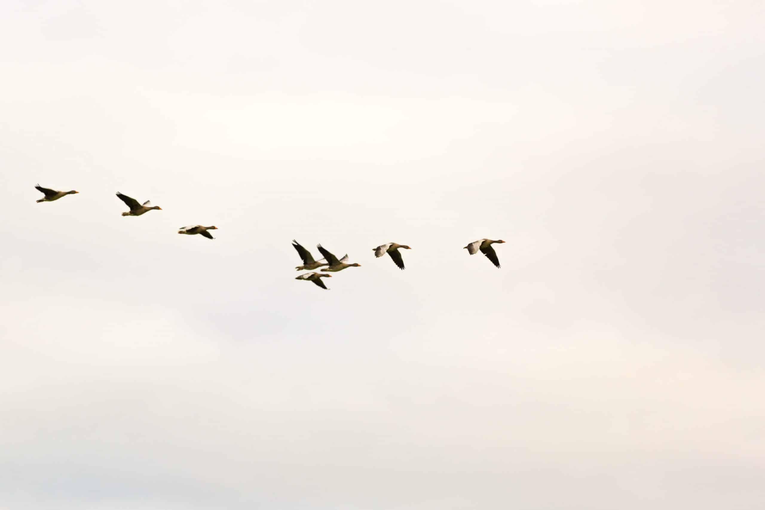 Pássaros voando no céu.