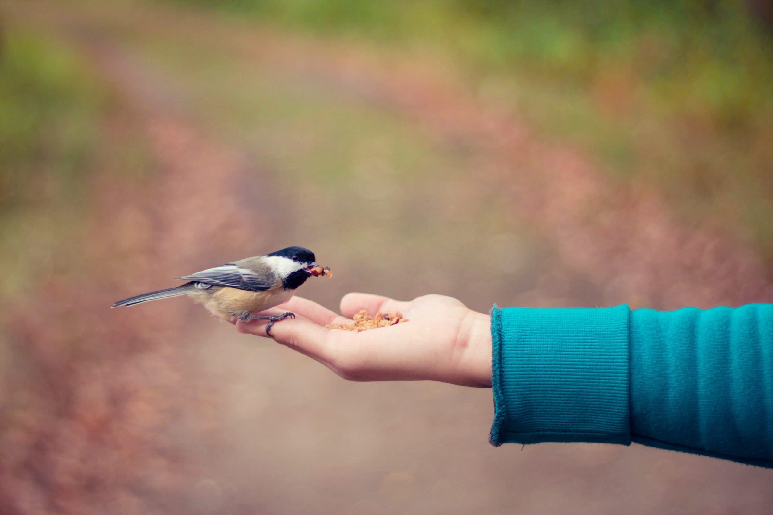 Mão estendida com comida e um pássaro bicando.