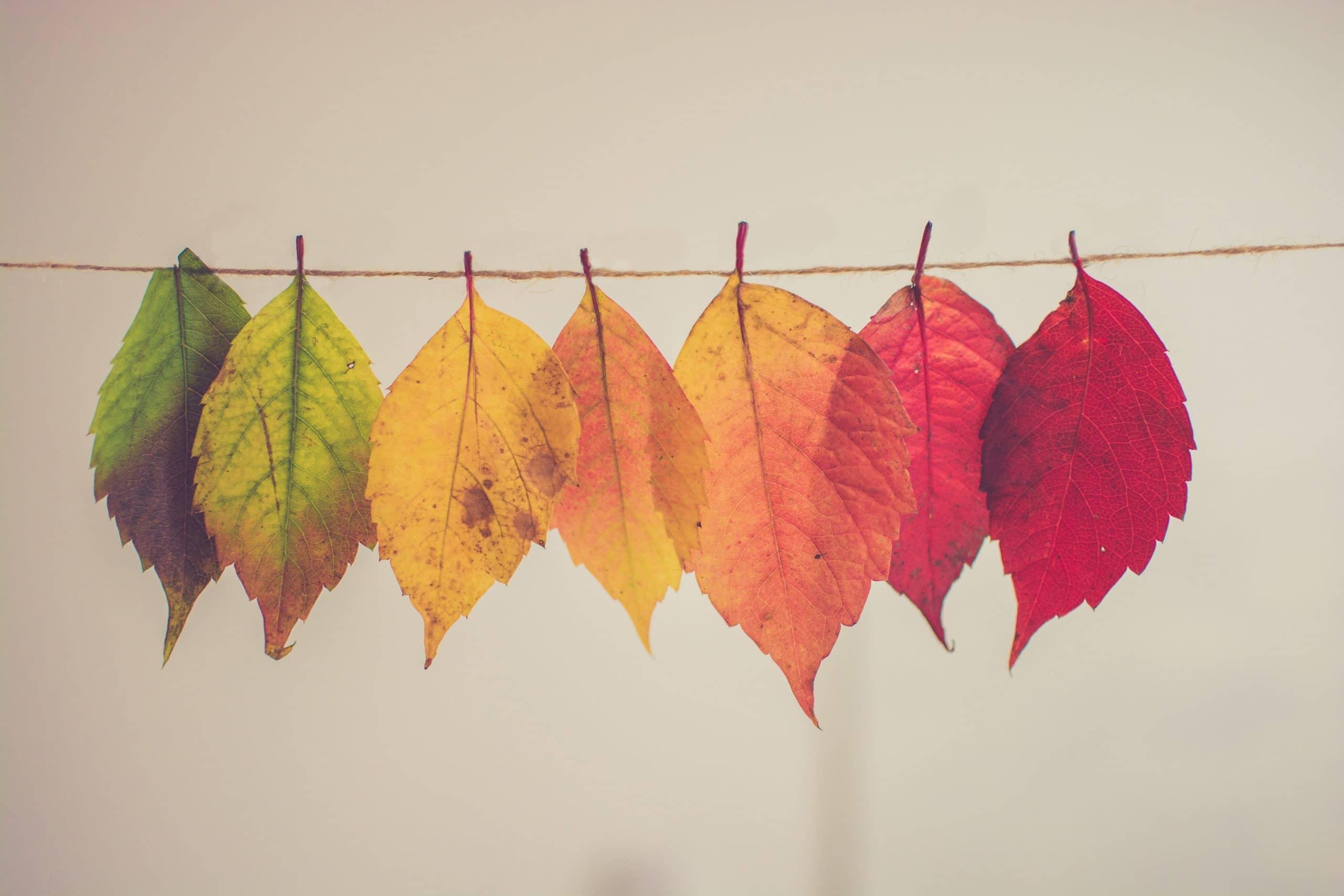 Varal com folhas com as cores de acordo com as estações do ano