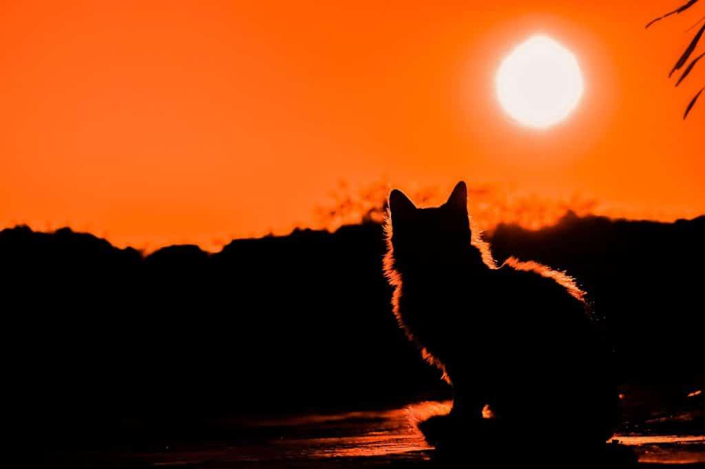 Sol vibrante e laranja de fundo iluminando a silhueta de um gato.