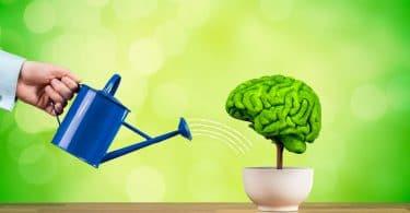 Planta em forma de cérebro sendo regada