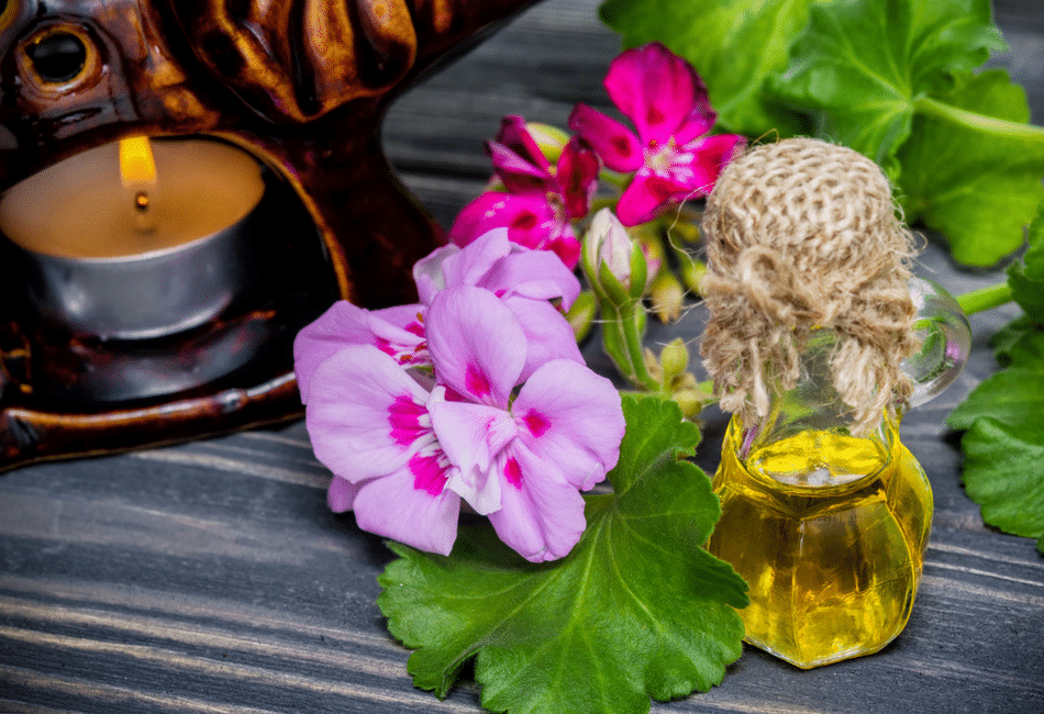 Mesa com flores, folhas e vidro de óleo de gerânio